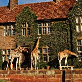 Giraffe-Manor-in-Nairobi-Kenya-4