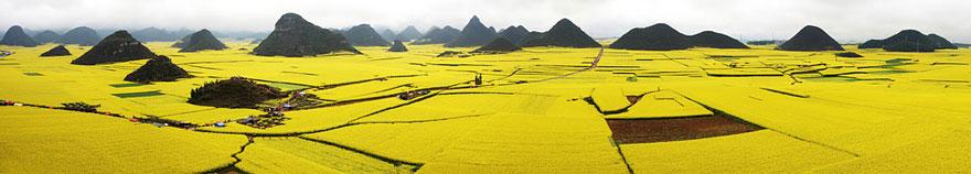 Campi di colza, Cina