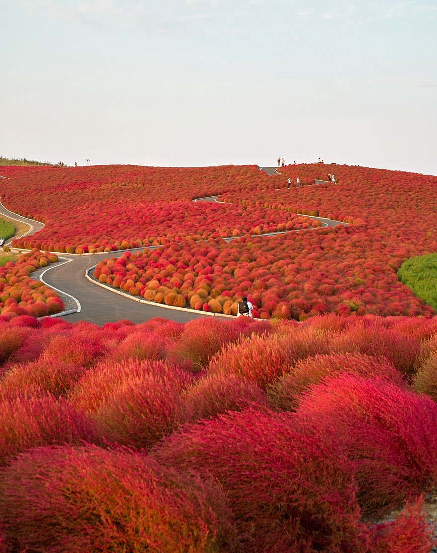 Hitachi Seaside Park, Giappone