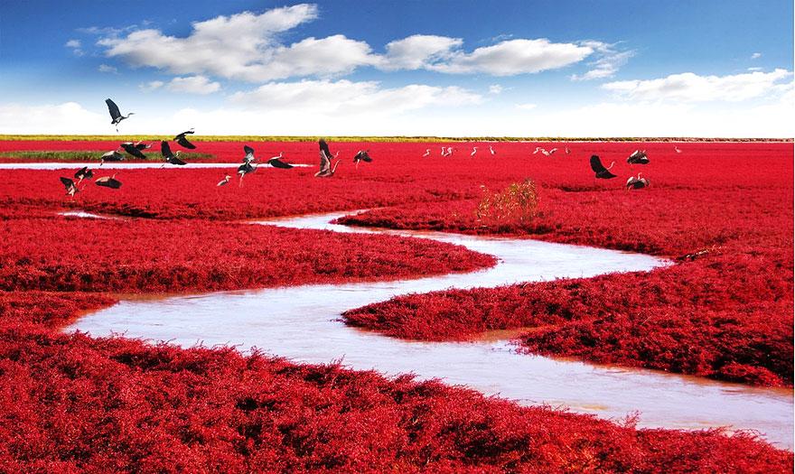 Red Beach, Panjin, Cina