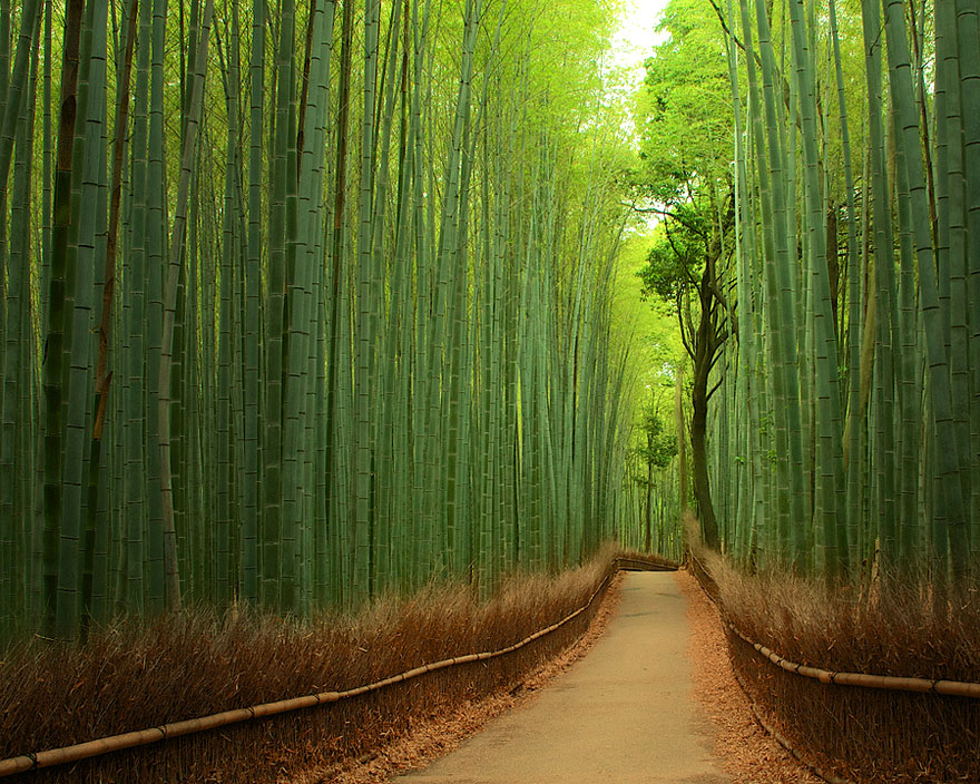 Bamboo Forest, Giappone