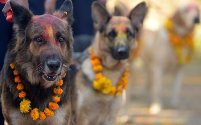 cani addobbati per il diwali in Nepal