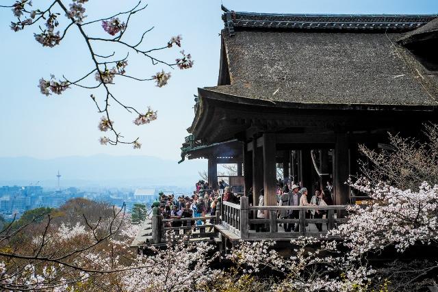 Fioritura dei ciliegi in Giappone - Reporter Live (11)