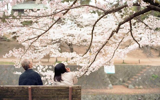 Fioritura dei ciliegi in Giappone - Reporter Live (12)
