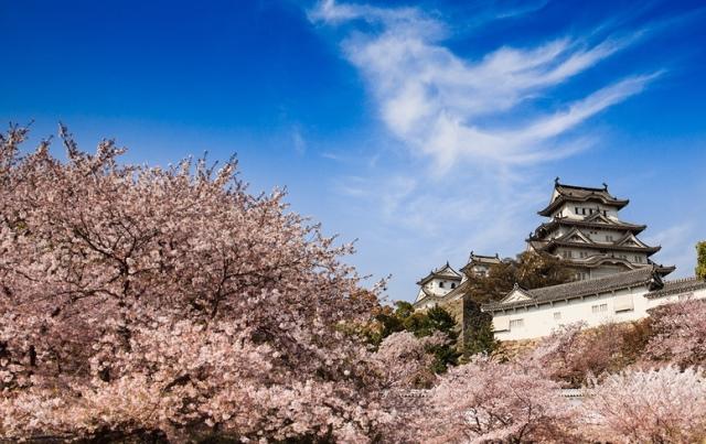 Fioritura dei ciliegi in Giappone - Reporter Live (13)