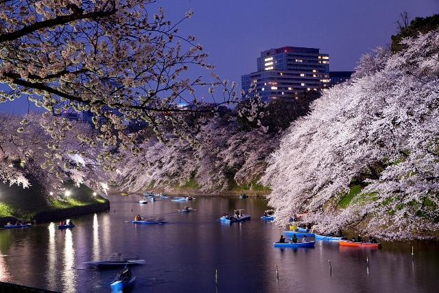 Fioritura dei ciliegi in Giappone - Reporter Live (15)