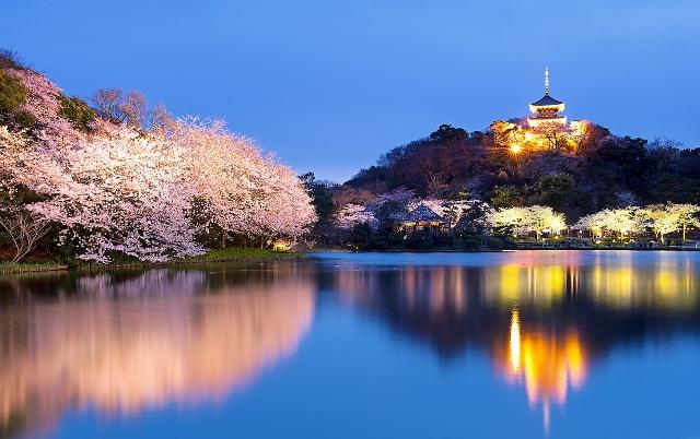 Fioritura dei ciliegi in Giappone - Reporter Live (16)