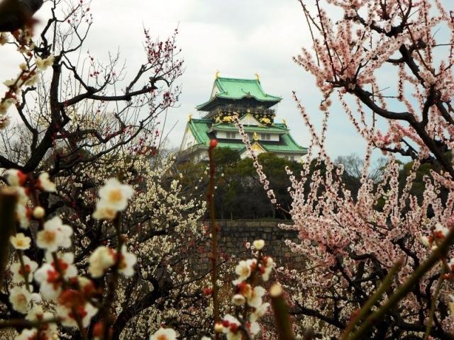 Fioritura dei ciliegi in Giappone - Reporter Live (17)
