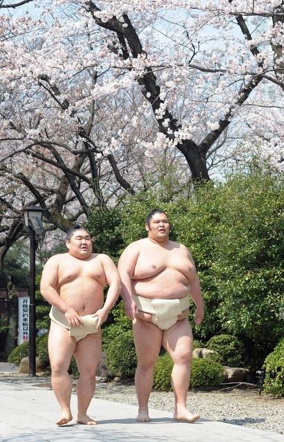 Fioritura dei ciliegi in Giappone - Reporter Live (22)