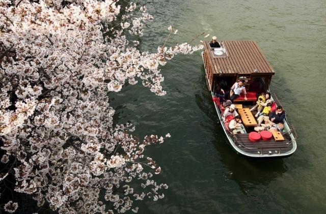 Fioritura dei ciliegi in Giappone - Reporter Live (24)