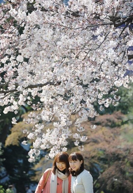Fioritura dei ciliegi in Giappone - Reporter Live (27)