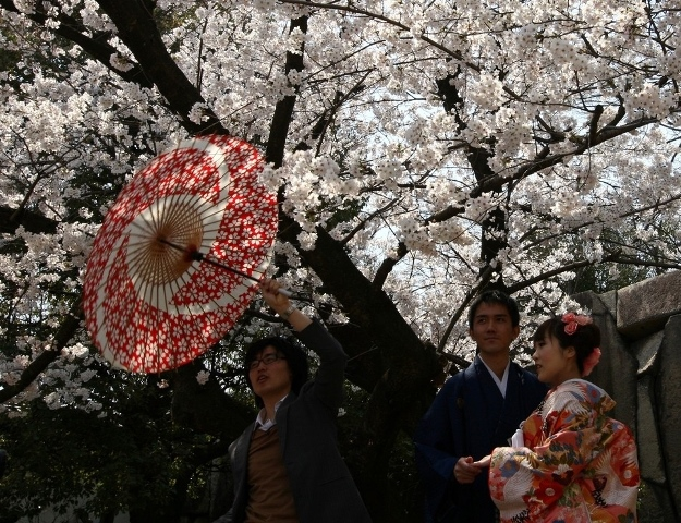 Fioritura dei ciliegi in Giappone - Reporter Live (29)