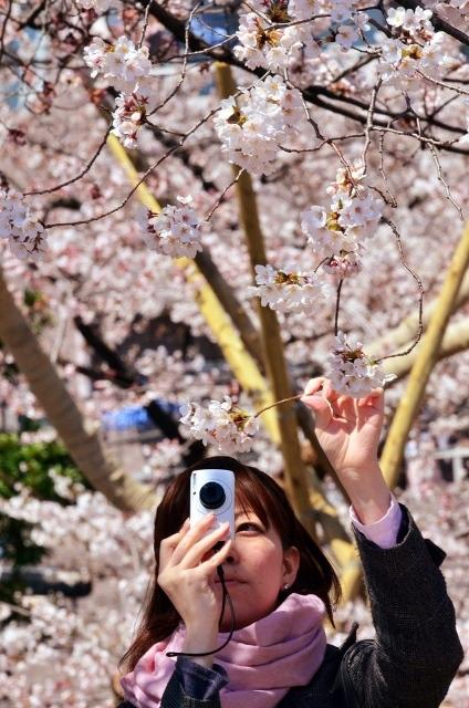 Fioritura dei ciliegi in Giappone - Reporter Live (30)
