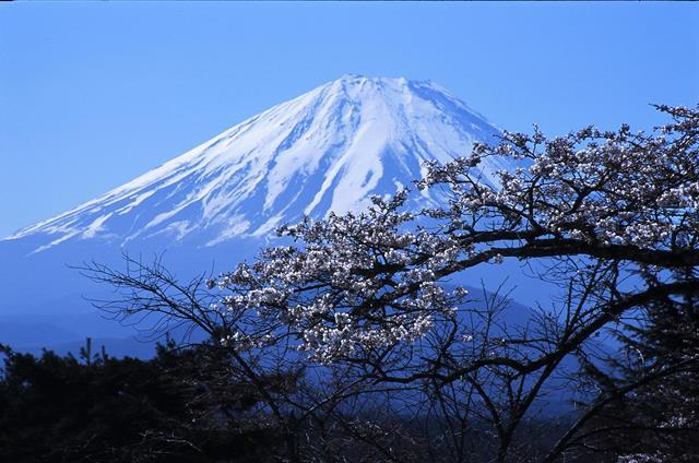 Fioritura dei ciliegi in Giappone - Reporter Live (33)