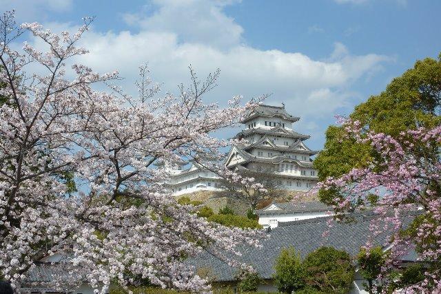 Fioritura dei ciliegi in Giappone - Reporter Live (35)