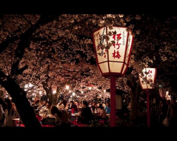 Fioritura dei ciliegi in Giappone - Reporter Live (4)