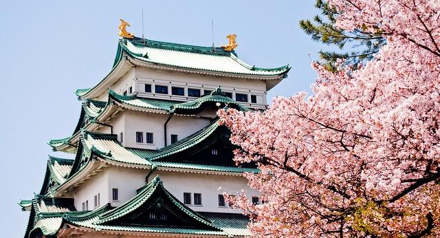 Fioritura dei ciliegi in Giappone - Reporter Live (6)
