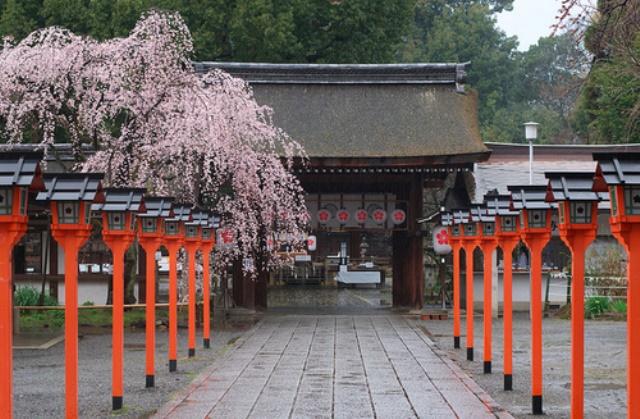 Fioritura dei ciliegi in Giappone - Reporter Live (9)