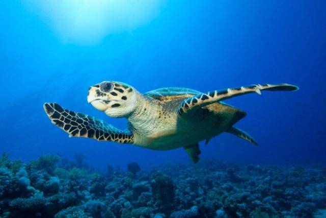 Tartaruga Marina Galapagos