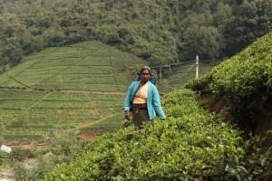 reportage dallo sri lanka di elena cervesato srilarca2014 foto (4)