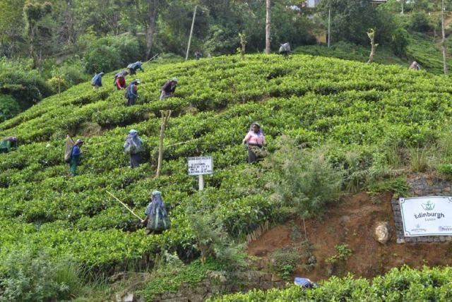 reportage srilarca2014 agnese di giusto foto 11