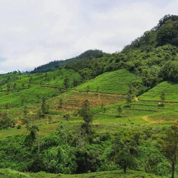 viaggio in Sri Lanka con il tour operator Reporter Live